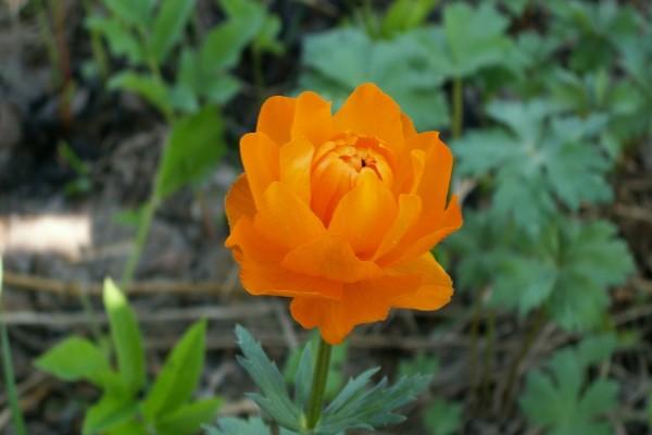 Una flor naranja