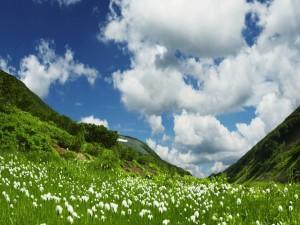 Postal: Flores en la pradera verde
