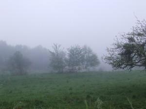Postal: Niebla al amanecer en Asturias (España)