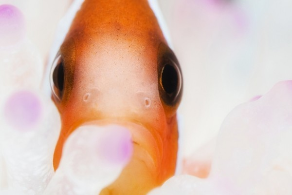 Cara de pez