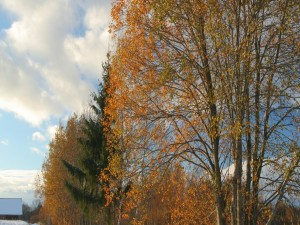 Postal: Árboles al final del otoño
