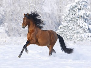 Postal: Caballo marrón en la nieve