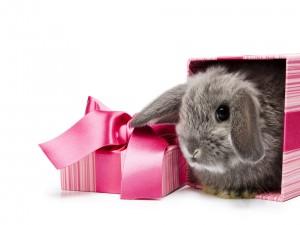 Conejito en una caja de regalo