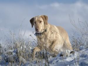 Perro blanco caminando sobre la nieve