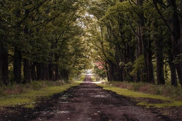Hilera de árboles al lado del camino