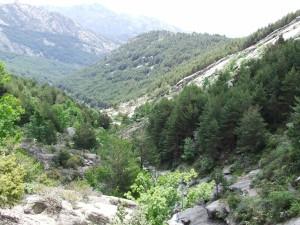 Postal: Árboles en La Pedriza (Madrid, España)
