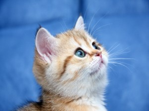 Postal: Gato curioso