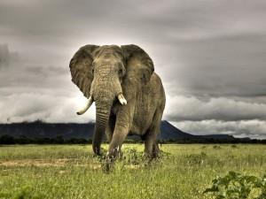 Postal: Gran elefante