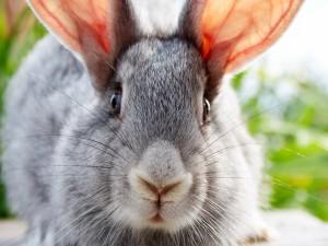 Postal: La cara del conejo