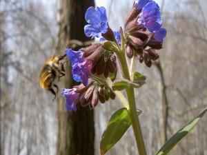Flores y abejorro