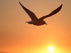 Postal: Gaviota y el sol