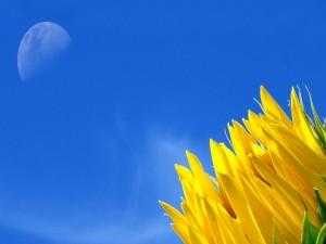 Postal: Pétalos de un girasol y la luna