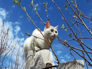 Postal: Gato blanco caminando sobre unos troncos