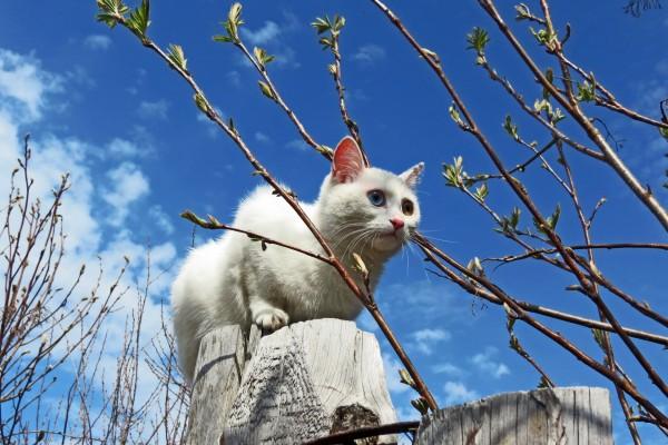 Gato blanco caminando sobre unos troncos