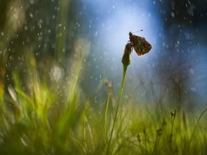 Postal: Gotas de lluvia sobre la mariposa