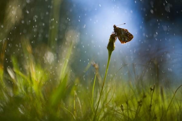 Gotas de lluvia sobre la mariposa
