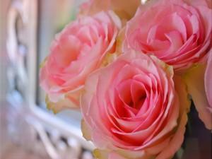 Tres rosas abiertas