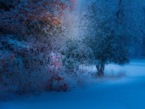 Postal: Árboles cubiertos con nieve
