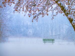 Cae nieve sobre un banco solitario