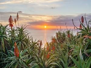 Mar y plantas al atardecer