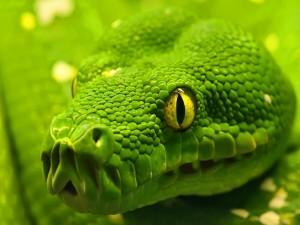 Cerca de la serpiente verde