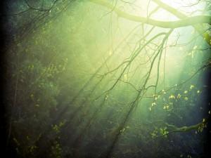 Árboles y luz entre las ramas