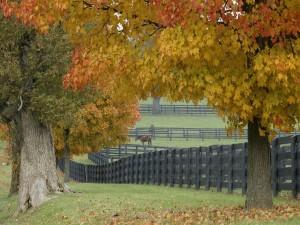 Postal: Grandes árboles junto a la granja