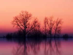 Árboles y colores del atardecer