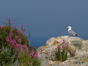 Gaviota sobre la roca con flores