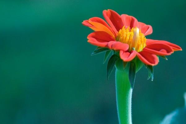 Flor con un tallo grueso