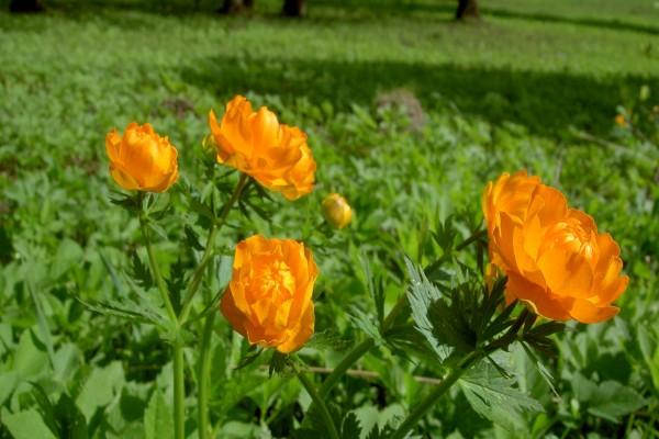 Plantas verdes con flores naranjas