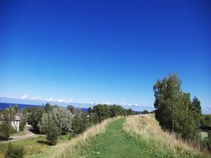 Postal: Camino verde