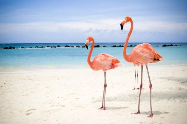 Flamencos en la playa
