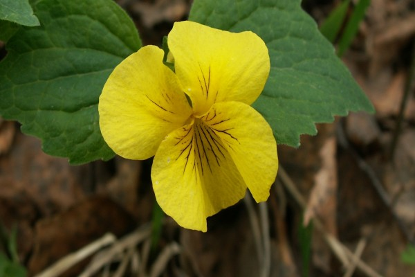 Planta con una flor amarilla