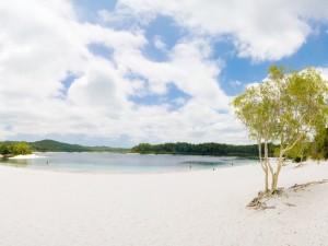 Postal: Árbol en la playa