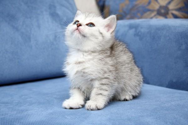 Gatito mirando al techo
