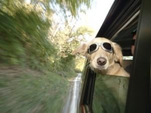 Postal: ¡Me gusta la velocidad!