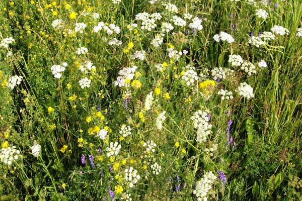 Flores silvestres y hierba