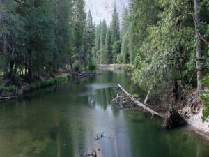 Troncos en el río