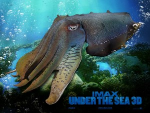 Under the Sea (IMAX 3D)