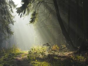 Postal: Camino del bosque iluminado