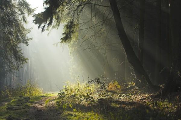 Camino del bosque iluminado