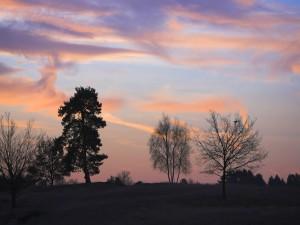 Postal: Árboles en el campo al atardecer