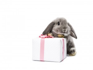 Postal: Conejo gris y un regalo