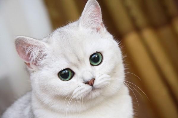 Gato con ojos grandes