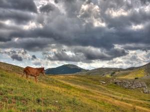 Postal: Solo en la montaña