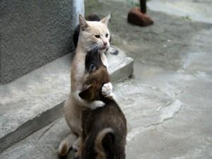 Gato abrazando a un perro