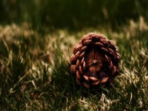 Postal: Piña sobre la hierba