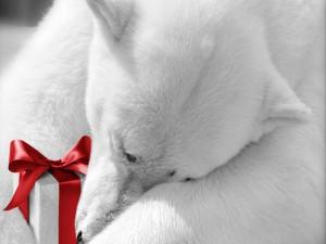 Osos polar con un regalo