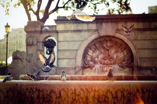 Palomas en la ciudad
